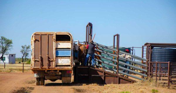 livestock standard